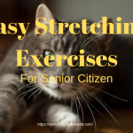 easy stretching for seniors